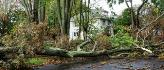 Storm Damage Image.png